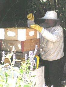 emery-dann-hive